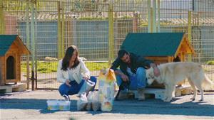 Can ve Sanem barınaktaki hayvanlarla vakit geçiriyor!